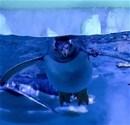 Gentoo penguenleri yoğun ilgi görüyor