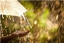 Yağmur suyunun faydaları