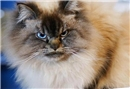Herkesten nefret eden kedi, Merlin