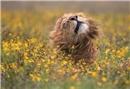 National Geographic doğa fotoğrafları yarışmasının 2017 kazananları