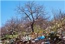 Daha az plastik kullanımı için ipuçları