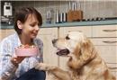 Köpeğiniz için 5 sağlıklı atıştırmalık