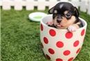Sevimli dostumuz köpeklerin yaşı nasıl hesaplanır?