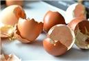 Yumurta kabuklarını çöpe atmayın!