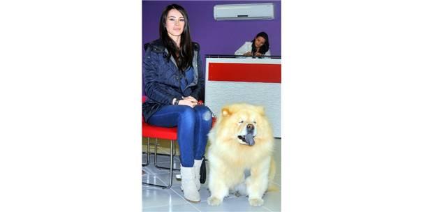 Pet Pansiyon' ile Evcil Hayvanlara AVM Yolu Açıldı 89