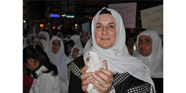 Gazze için gökyüzüne barış güvercini bıraktılar