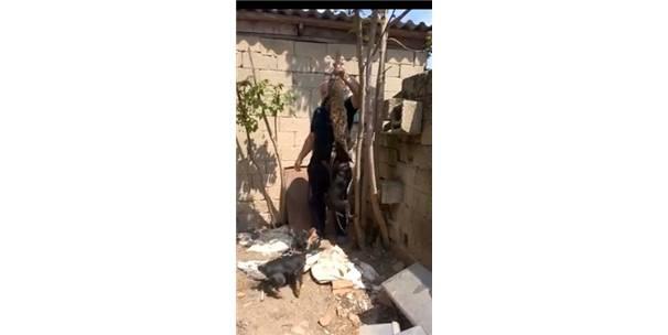 Hayvanseverler Kırklareli'deki kedi katiline Eskişehir ile emsal dava istiyor