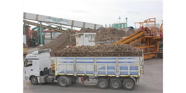 Amasya Şeker Fabrikası Genel Müdürü Çapraz: