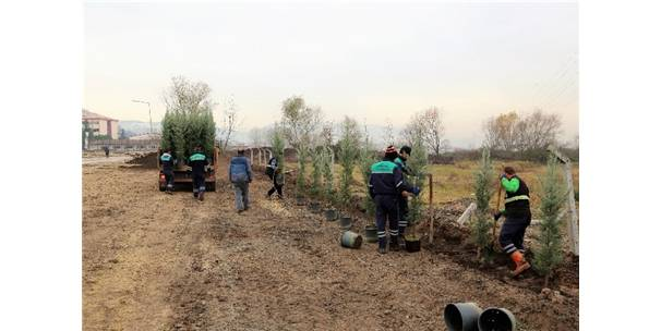 Başiskele'de 1 Yılda 5 Bin Adet Ağaç Toprakla Buluştu