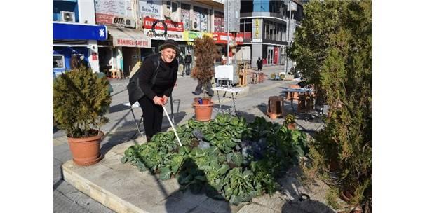 Caddede Organik Tarım