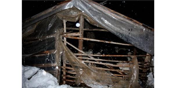 Hayvanların Bulunduğu Baraka Kardan Çöktü