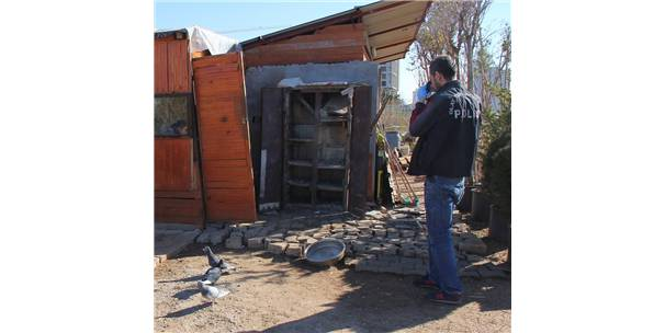 Adana'da Keçi Ve Güvercin Hırsızlığı