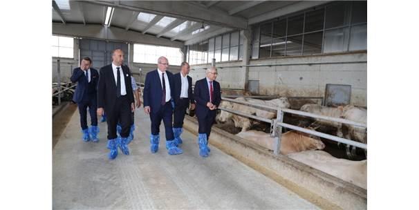Ato Başkanı Baran Sincan Hayvancılık Bölgesini Ziyaret Etti