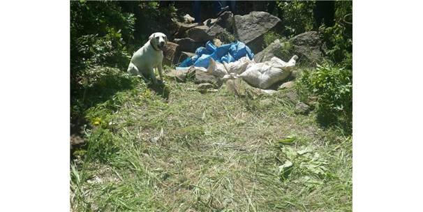 Bitlis'te 2 Ton Amonyum Nitrat İmha Edildi