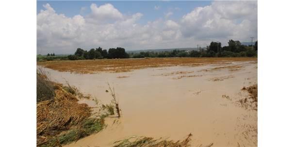 Manavgat'ta Etkili Olan Yağmur Yüzlerce Dönüm Ekili Araziye Zarar Verdi