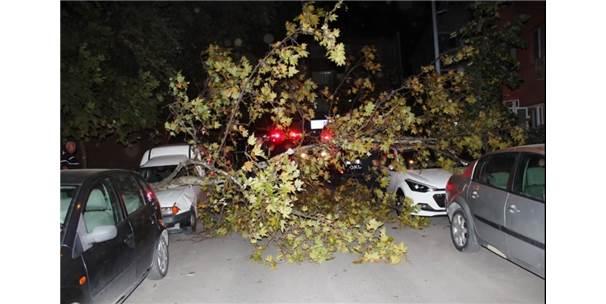 Yalova'da Ağaçlar Yerinden Söküldü