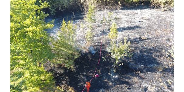 Sinop'ta Fındık Bahçesi Yangını
