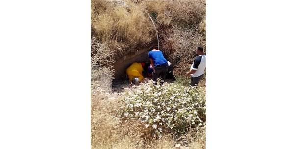 Tunceli'de Yaralı Köpeği Afad Ekibi Kurtardı