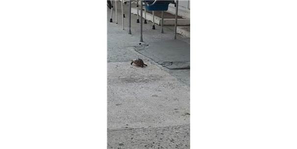 Kaplumbağanın Kabuğundan İple Bağlanması Tepki Çekti