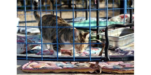 Türkiye'de İlk Defa Okul Bahçesine Kedi Evi Kuruldu