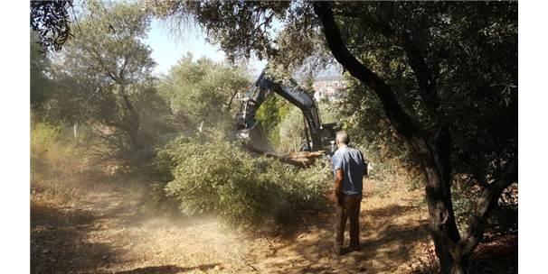 Yaya Yolu Yapılacak Diye 50'Ye Yakın Ağaç Kesildi İddiası