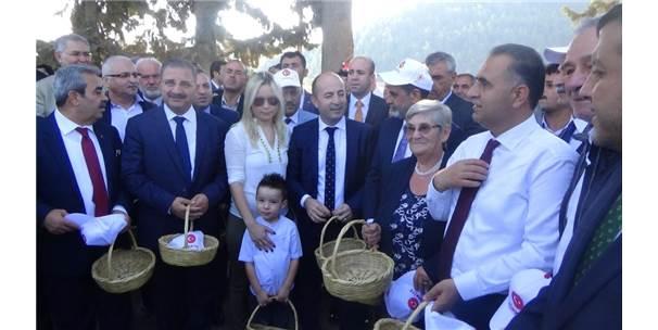 """Canan Karatay: """"Zeytin Ömrü Uzatıyor"""""""