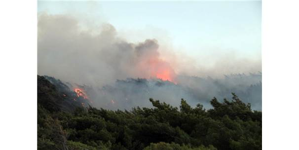 Datça'daki Orman Yangını Söndürüldü