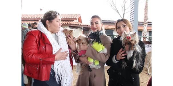 Köpek Irkları Yarışması İkinci Gününde