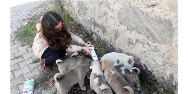 10 Yaşındaki Pelin Terk Edilen Köpeklere Sahip Çıktı