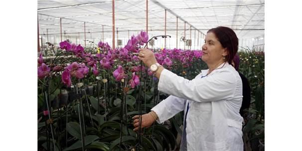 Sevgililerin Orkidesi Antalya'dan