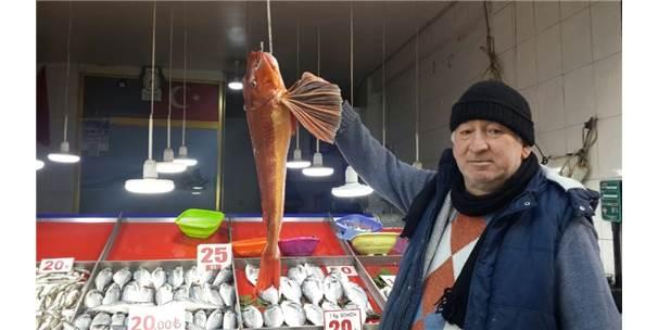 Uçar Balığı Ağa Takıldı