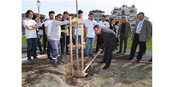 Başkan Böcek, Afrin Şehitleri Anısına Ağaç Dikti