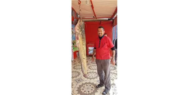 (Özel Haber) Oltayla 45 Kiloluk Yayın Balığı Yakaladı