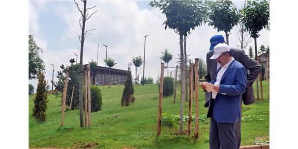 Trabzon'un 103 Dönümlük Botanik Bahçesi Tamamlanıyor