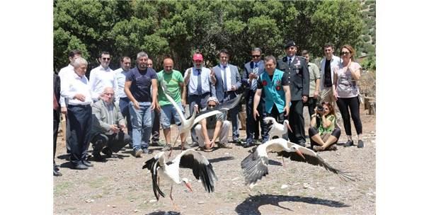 Tedavisi Tamamlanan Leylek, Baykuş Ve Çakal Doğaya Salındı