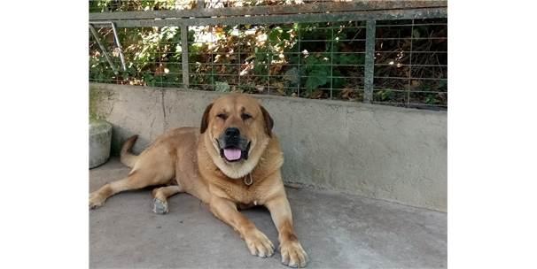 Adnan Oktar'ın Kedicikleri Gitti, Villanın Önündeki Köpek Kaldı