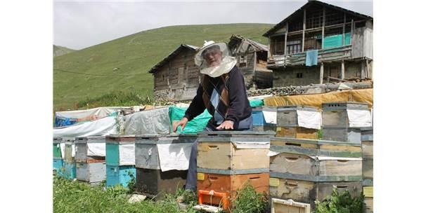 Arıcılar Anzer Balının Rekoltesini Düşük Bekliyor