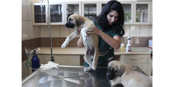 Yavru Köpeklere Akılalmaz İşkence
