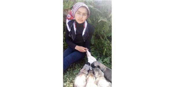 Rizeli Hamdu Sena Annesiz Kalan 4 Minik Köpeğe Anne Oldu
