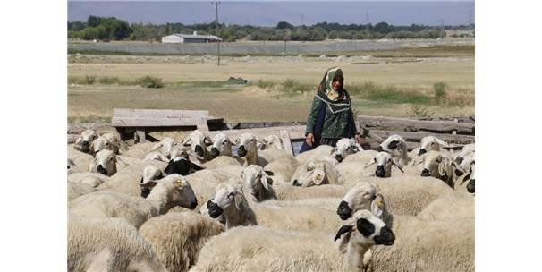 40 Koyun Çocuklarının Geleceği Açısından Umut Oldu