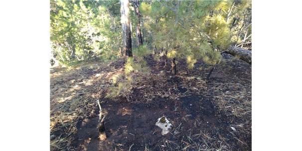 Emet'te Orman Yangınına Erken Müdahale Faciayı Önledi