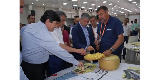 Bitlis'teki Peynir Fuarının Yankıları Sürüyor