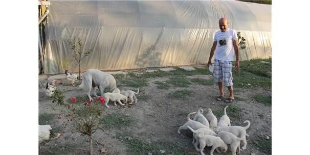 İnsanlardan Sıkıldı Hobi Çiftliği Kurdu