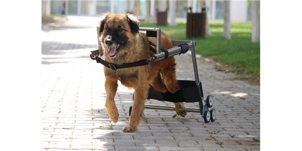 Vestel'den Engelli Hayvanlara Yürüteç