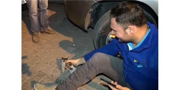 Aracın Motor Kısmına Sıkışan Yavru Kedileri Vatandaşlar Kurtardı