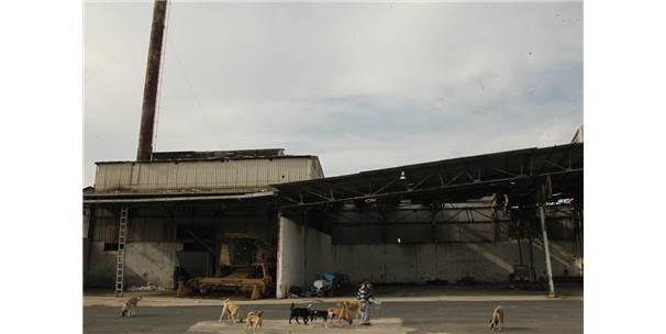 Üretime Kapadığı Fabrikasının Kapılarını Sokak Hayvanlarına Açtı