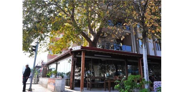 Asırlık Çınarı Kesmek Yerine Kahvehaneyi Ağaca Göre Şekillendirdiler