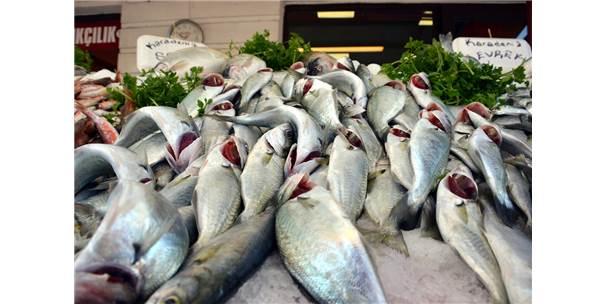 Zonguldak'ta Balıkçılar Uskumruyu Bekliyor