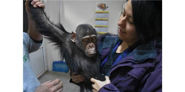 """Şempanze Can'a """"Özel Aile Terapisi"""""""