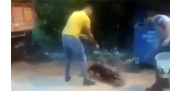 Köpeğine, Sokak Kedisini Parçalattı